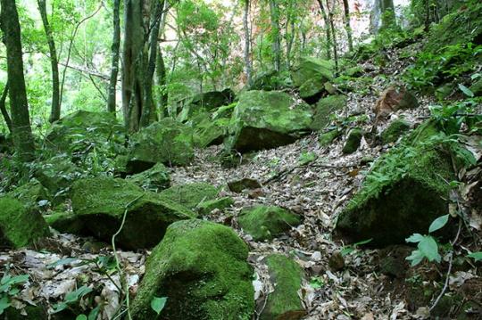 Piedras Helechos Samaipata